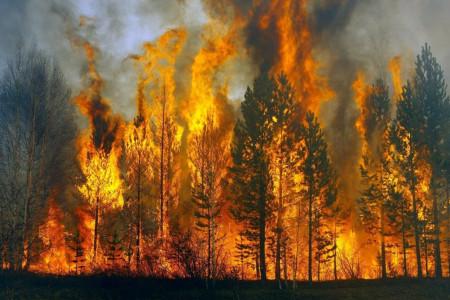На Дніпропетровщині оголошена найвища пожежна небезпека